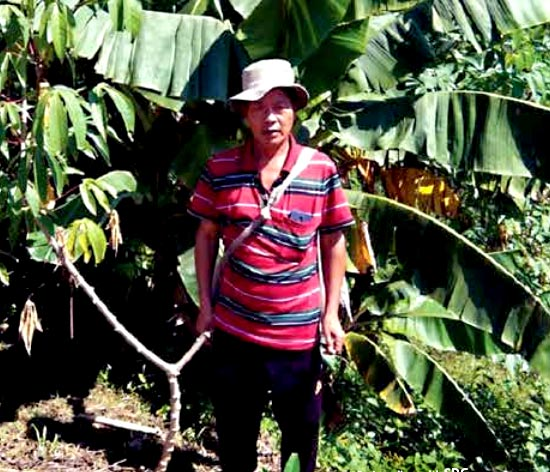 Mr Biakkunga, village Zotuitlang, Lunglei district, Mizoram was able to produce higher yield of bananas, owing to the technical know-how regarding agricultural practices imparted by the NEIDA experts.