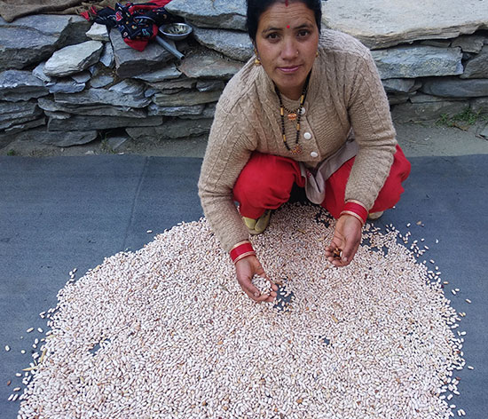 Chandra Devi with her harvest of rajma