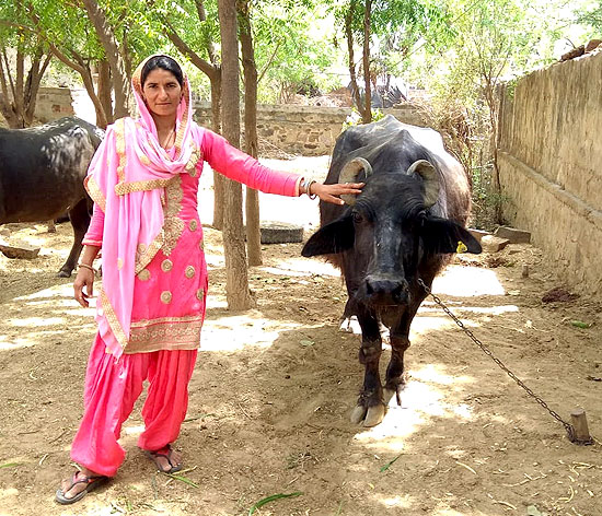 Julfina Bano is now the proud owner of five buffaloes and a cow