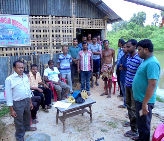 Villagers receiving training on magur breeding