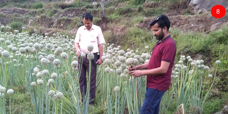 Field inspection for seed certification by USSCOA, UK and Himmotthan